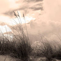 Sea Oates in Sepia by nathanieljc