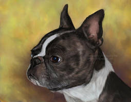 Boston Terrier Painting by Bezumiye
