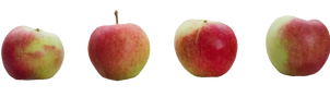 apple stock by cindysart-stock by CindysArt-Stock