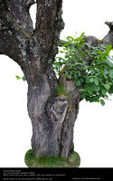 Old tree by cindysart-stock by CindysArt-Stock