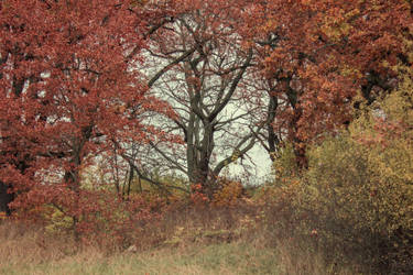 Autumn 11 by CindysArt-Stock
