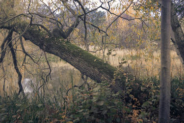 Autumn 12 by CindysArt-Stock