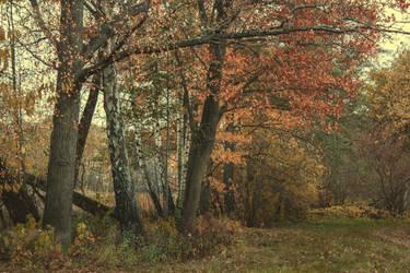 Autumn 13 by CindysArt-Stock