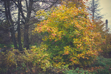Autumn 15 by CindysArt-Stock