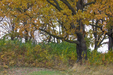Autumn 16 by CindysArt-Stock