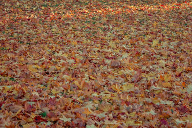 Autumn 19 by CindysArt-Stock