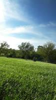 green grassy field by DougFromFinance