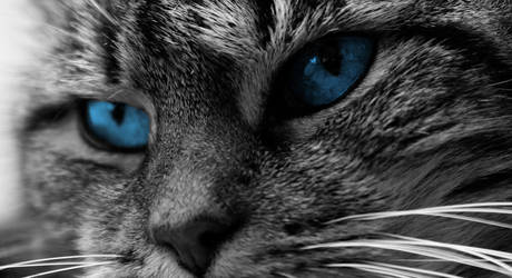 Blue Eyes by MaryJ-Photography