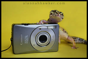 The Photographer by Alannah-Hawker