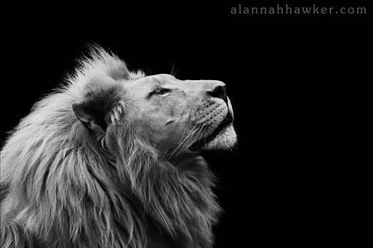 Thabo... by Alannah-Hawker