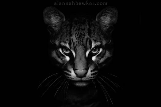 Dark Side... by Alannah-Hawker