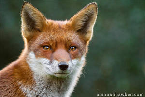Scamp 07 by Alannah-Hawker