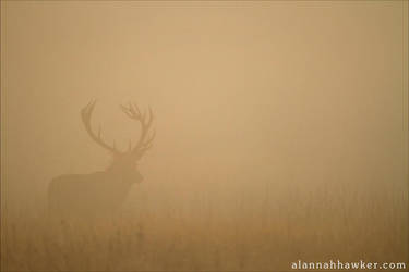 Haze by Alannah-Hawker