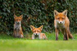 Three's Trouble by Alannah-Hawker