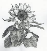 Sunflower by KerstinSchroeder