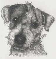 Doggy by KerstinSchroeder