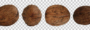 Wallnut PNG by raduluchian
