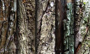 Tree bark - texture pack by raduluchian