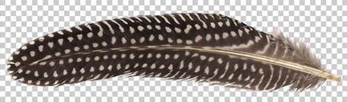 Guineafowl feather PNG by raduluchian