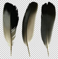 Pigeon feathers PNG by raduluchian