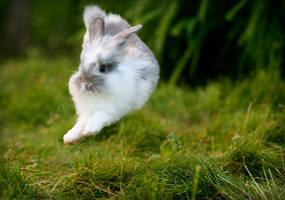 Ninja Bunny by CheckAvailability