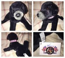 Douglas Medium Floppy Dogs- Harley Black Lab by Disney1123