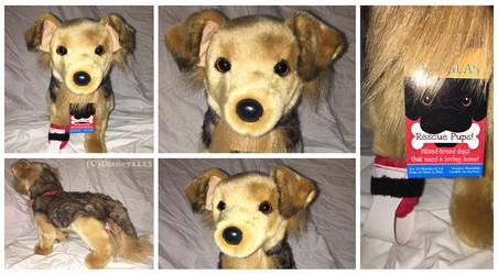 Douglas Medium Rescue Dogs- Bingley Shepherd Mix by Disney1123