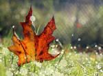 Fall by flowerhippie22