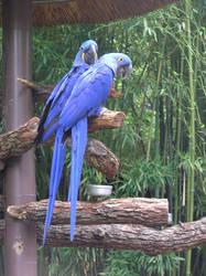 Purple Parrots by rapunzell