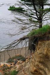 Misc stock tree roots by DarkladyStock