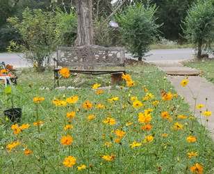 Yellow Flowers with Bench by KAW-7391
