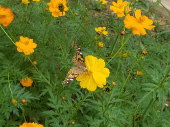 Yellow Flower with Butterfly 2 by KAW-7391