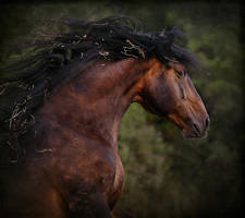 Crazy Horse by Marndi