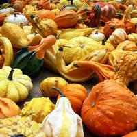 Various pumpkins by pozzz