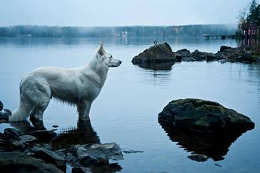 Dog shore of by SariKoljonen