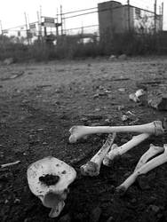 Bones by xbloodboughtx