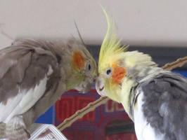 Lovebirds 2c by Windthin