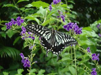 Butterfly Stock by firenze-design