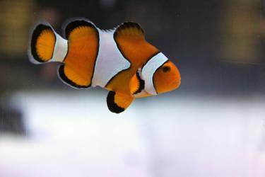 Finding Nemo by firenze-design
