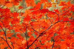 Autumn Leaves 6 by firenze-design
