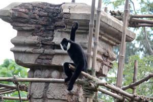 Black Monkey 2 by firenze-design