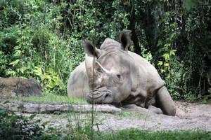 Rhino Stock by firenze-design