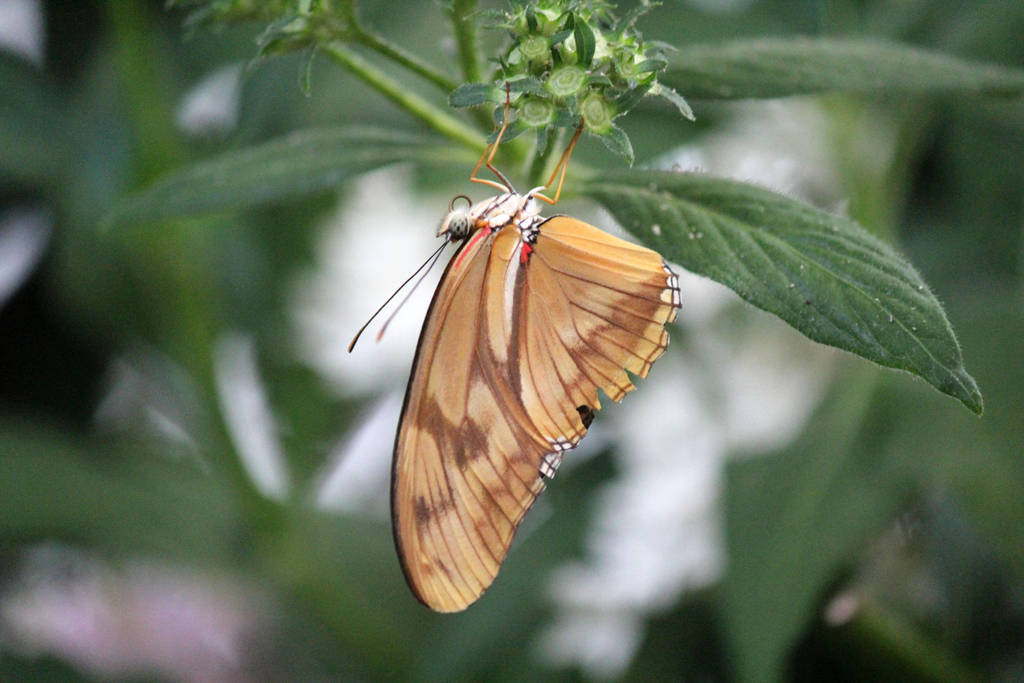 Golden Butterfly by firenze-design