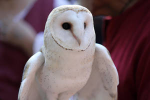 Owl Stock 3 by firenze-design