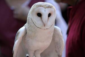 Owl Stock 2 by firenze-design