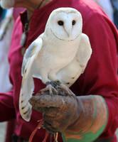 Owl Stock 1 by firenze-design