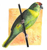 Kakariki by Paintwick