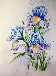 Irises by MrGalstuk