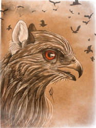 Red-shouldered Hawk Gryphon by GoldenWerewolf