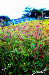 grassy adventure by adornor
